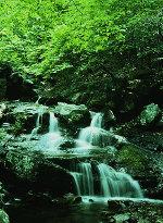 Cascade image